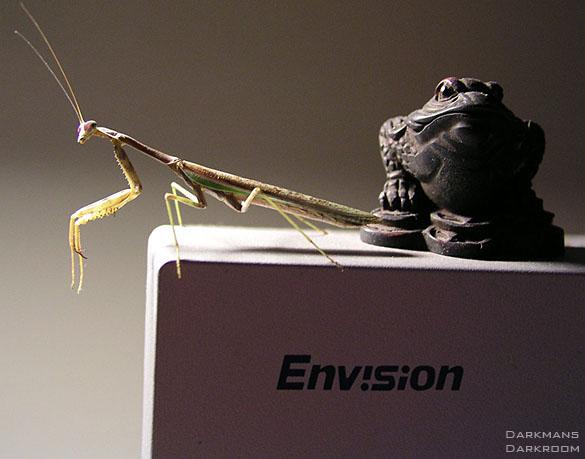 mantis-siteedit